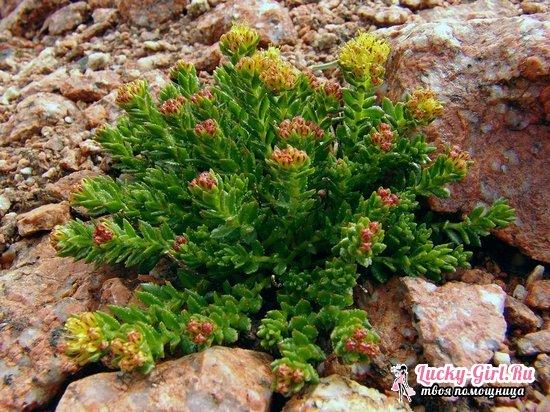 травы для улучшения потенции Нижние Серги