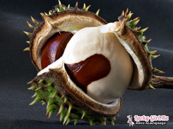 Настойка из плодов каштана от варикоза. Конский каштан: настойка на водке