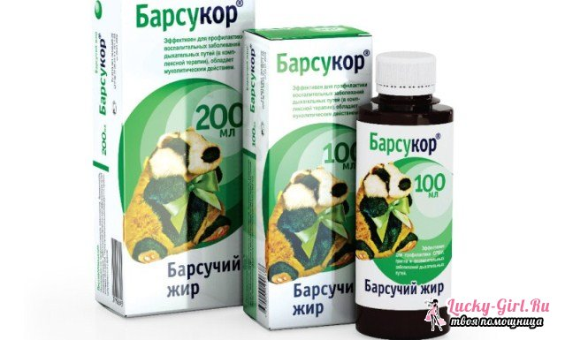 Барсучий жир: применение и противопоказания. Лечение барсучьим жиром