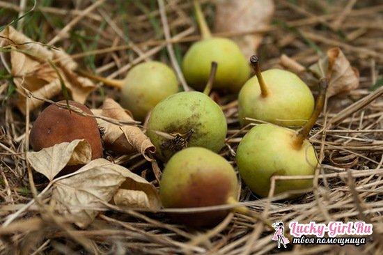 Рецепты компота из груши на зиму