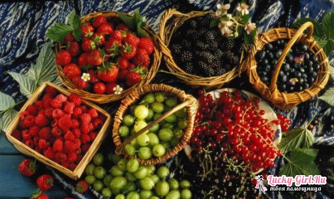 Варенье из лесных ягод. Рецепты и особенности различных технологий приготовления