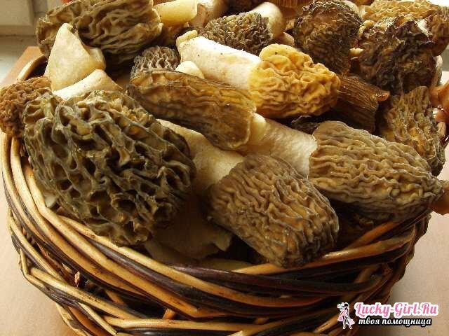 Как приготовить грибы сморчки?
