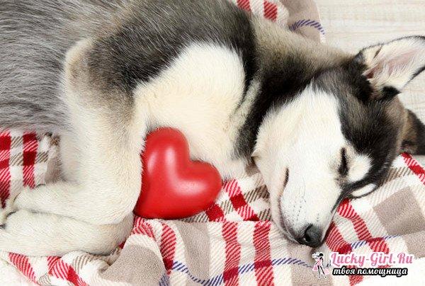 Применение Синулокса для собак