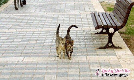 Сколько дней гуляет кошка: факты и способы решения проблемы
