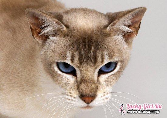 Гуляет кошка: как успокоить животное и что делать в дальнейшем?