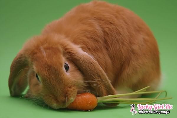 Чем кормить кроликов? Чем нельзя кормить кроликов?