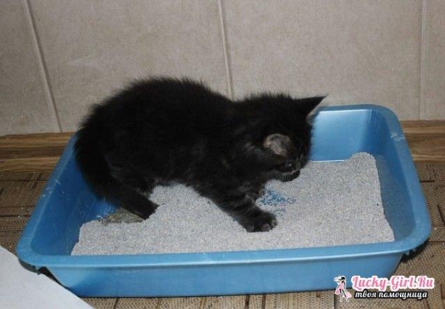 У котенка понос: что делать? Что дать от поноса котенку: препараты и диета