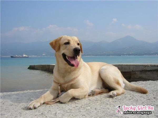 Сколько лет живут собаки? Продолжительность жизни дворовых и породистых собак
