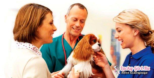 У собаки понос: что делать? Причины поноса у собаки и эффективное лечение