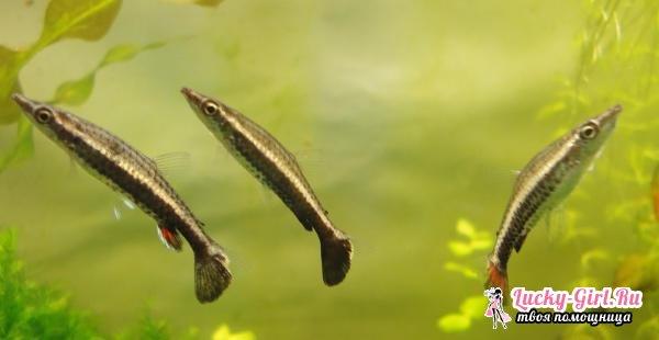 Виды аквариумных рыбок: фото. Совместимость аквариумных рыбок: правила