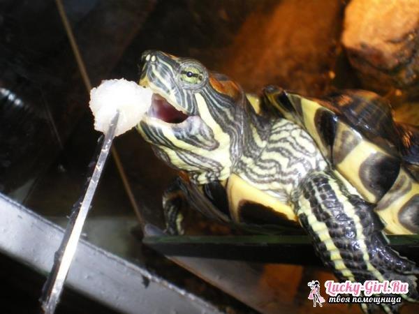 Аквариум для красноухой черепахи. Способы изготовления и обустройства аквариума