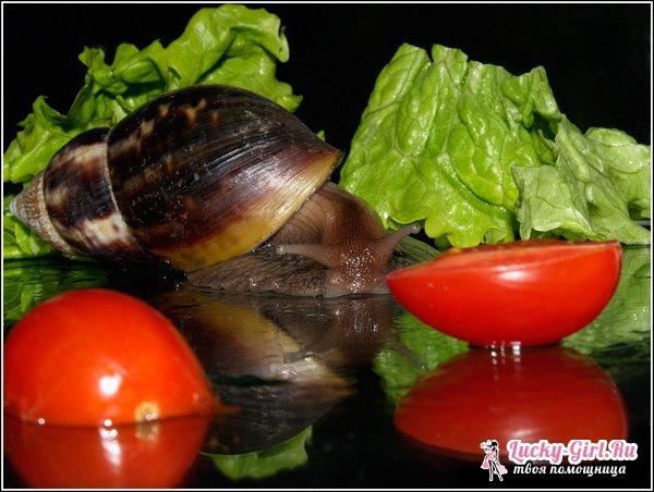 Что едят улитки? Рацион улиток в естественной среде обитания и домашних условиях