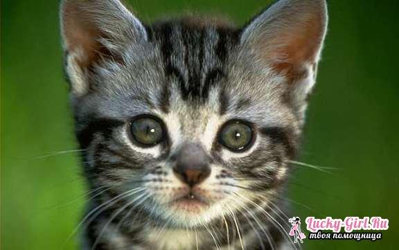 Кошачьи имена для мальчиков. Имена для котов