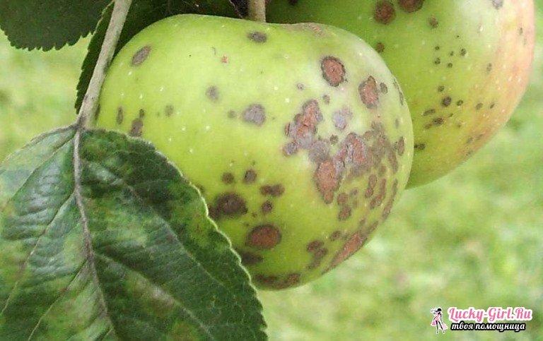 Болезни яблонь и их лечение фото