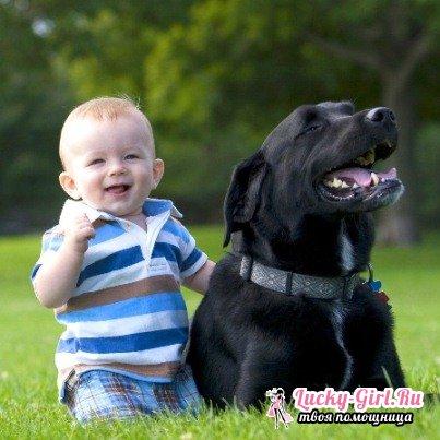 Собака в доме: плюсы и минусы