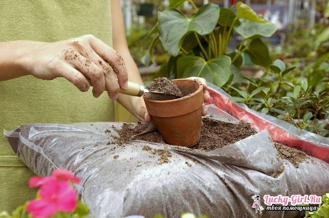 Когда пересаживать комнатные цветы? Правила, способы, полезные советы
