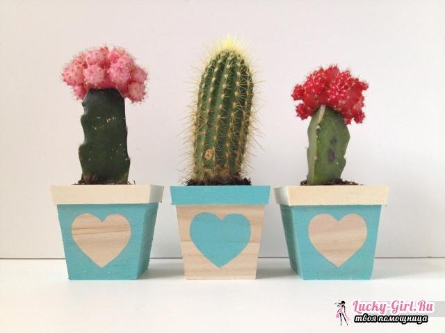 Как ухаживать за кактусом? Символ мексиканской пустыни на подоконнике