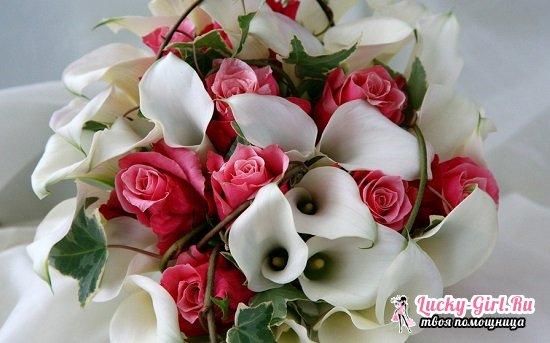 Каллы  почему цветы смерти?