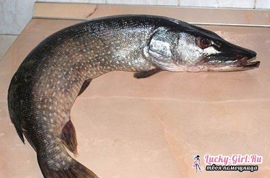 Фаршированная рыба в духовке: подборка лучших рецептов с фото