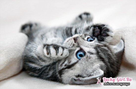 Как назвать кота-мальчика серого цвета  британского, шотландского, других пород?