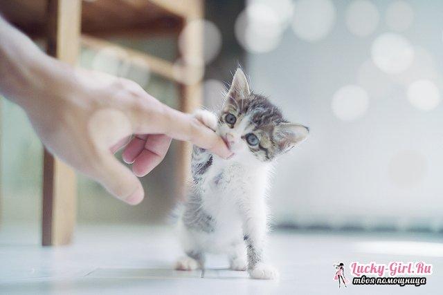 Как отучить котенка кусаться? Почему котенок кусается: основные причины
