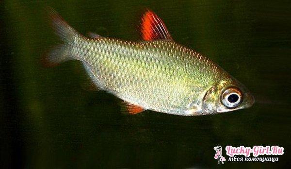 Совместимость видов аквариумных рыбок
