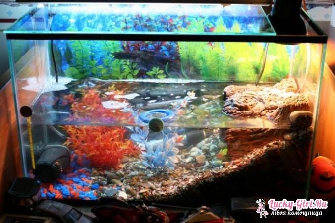 Своими руками в аквариум для черепахи фото 639