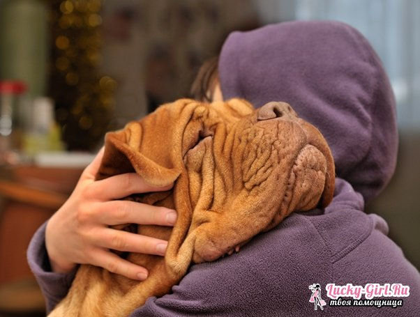 Что делать, если у собаки гноятся глаза? Причины, лечение и основы первой помощи