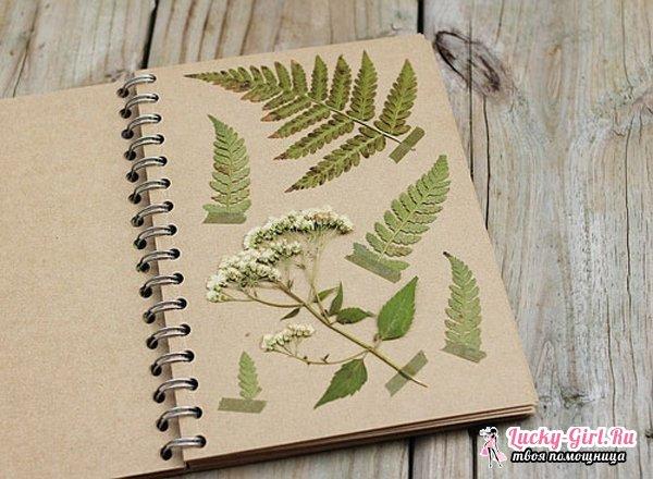 Гербарий из листьев: как сделать своими руками? Необычный гербарий из листьев: фото и рекомендации