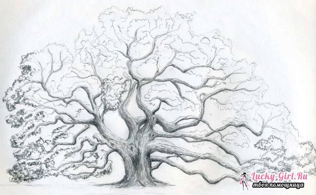 Как нарисовать дерево: пошаговые советы. Как нарисовать генеалогическое дерево?