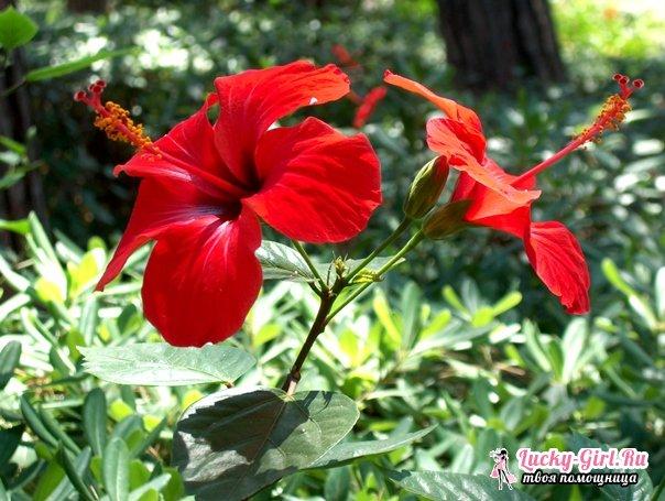 Цветы красного цвета. Описание, значение и самые популярные виды