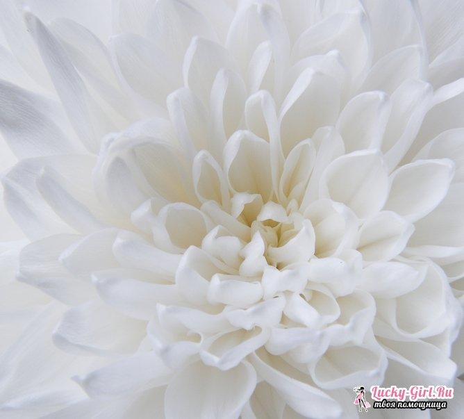 Цветы белого цвета. Названия, описания и фотографии белых цветов