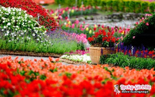 Красивые клумбы своими руками: идеи цветников. Как оформить клумбу просто и быстро?