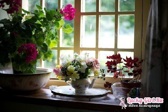 Неприхотливые красивые комнатные цветы, цветущие круглый год: названия и фото